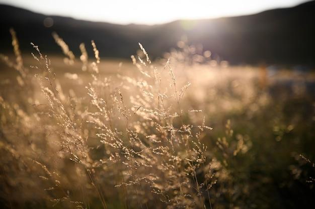 Campo de hierba durante la puesta de sol