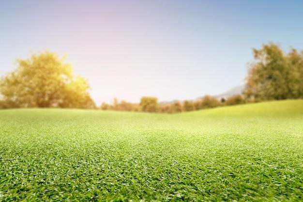Campo de hierba verde con árboles