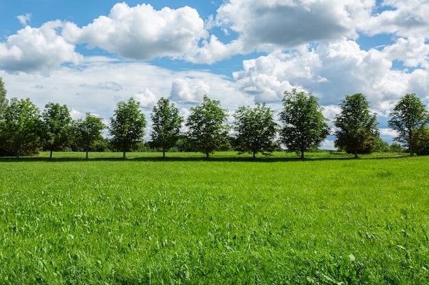 Campo de hierba verde con hilera de árboles y cielo azul nublado.