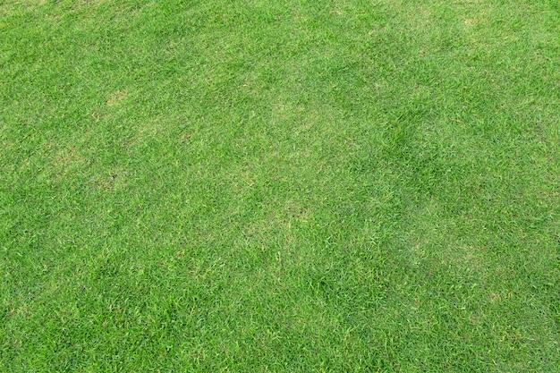 Campo de hierba verde