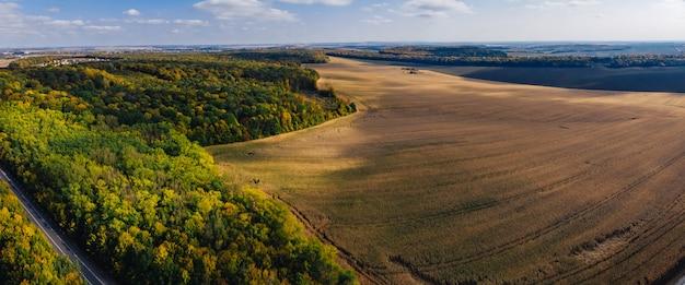 Campo de maíz y el campo de maíz panorámica aérea drone otoño