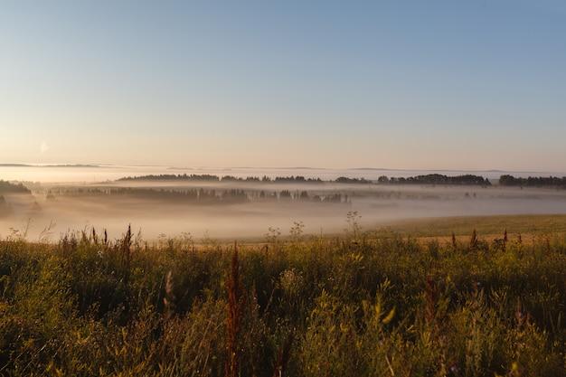 El campo de mayo en el sol y la niebla