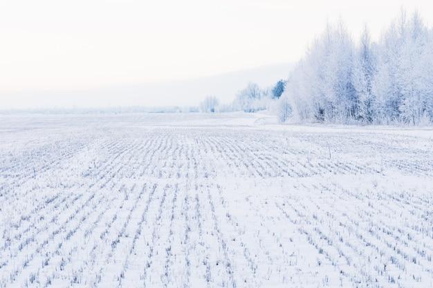 Campo de paisaje de invierno con árboles en escarcha