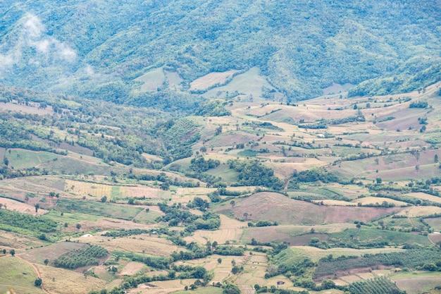 Campo de plantación del agricultor local en la colina.