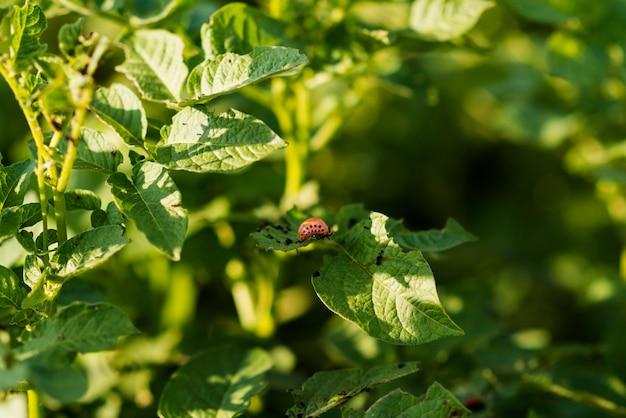 Campo de plantas de concepto de agricultura ecológica