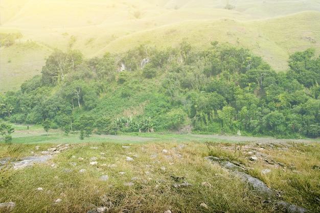 Campo de pradera con colinas