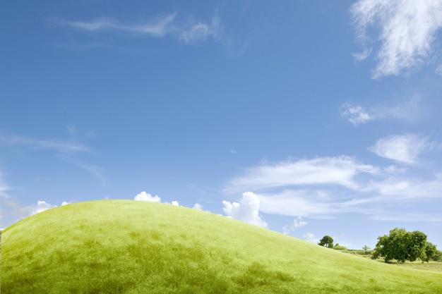 Campo de pradera con un fondo de cielo azul
