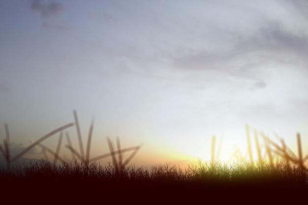 Campo de pradera con una superficie de cielo al atardecer