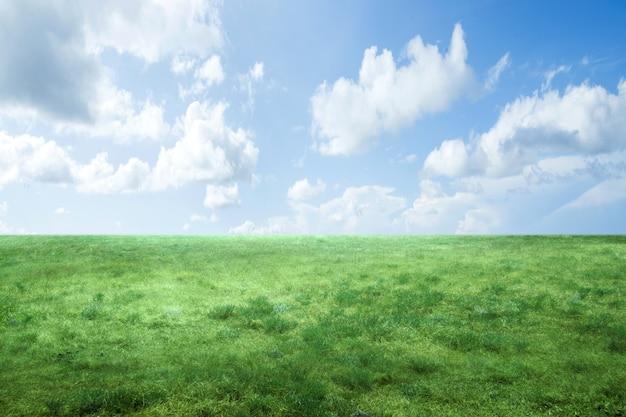Campo de pradera con una superficie de cielo azul. día mundial del medio ambiente