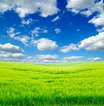 Campo sobre un fondo de cielo azul