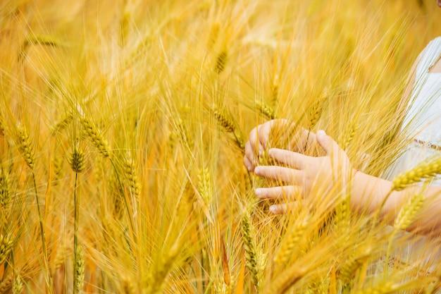 Campo de trigo y las manos de un niño. enfoque selectivo