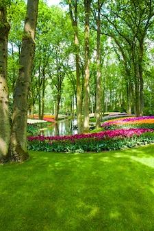 Campo de tulipanes en los jardines de keukenhof, lisse, países bajos