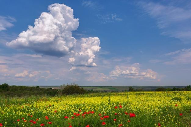 Campo verde con flores amarillas rasa y amapolas rojas, contra un cielo azul con nubes blancas