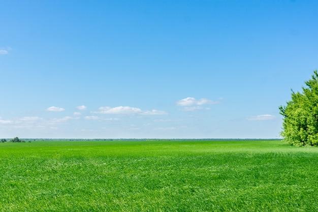 Campo verde ruso
