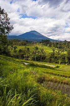 Campos de arroz de jatiluwih en el sureste de bali