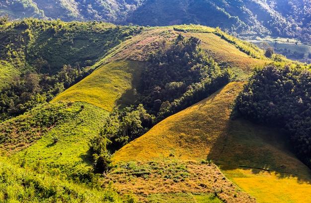 Campos de arroz en la montaña y la luz del sol por la mañana.