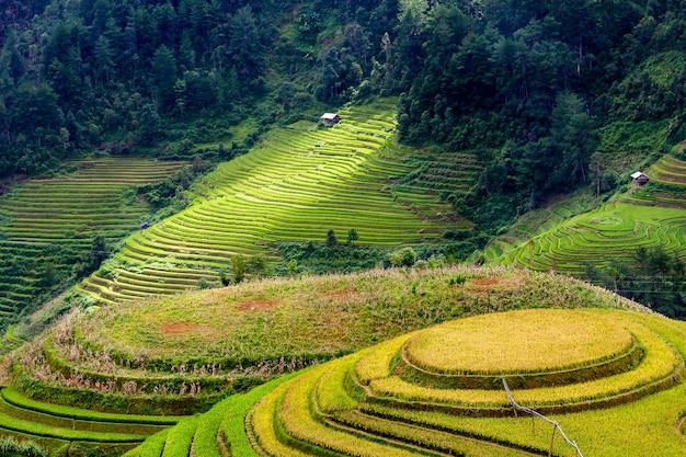 Campos de arroz en el noroeste de vietnam.