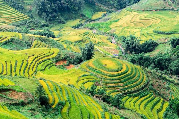 Campos de arroz en el noroeste de vietnam