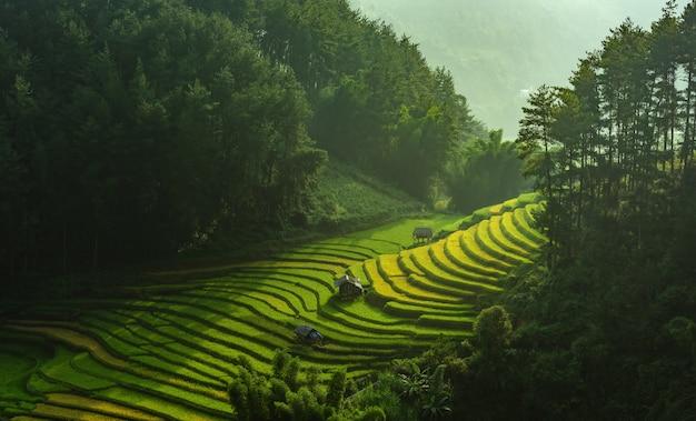 Campos de arroz en la terraza de mu cang chai, yenbai, vietnam.