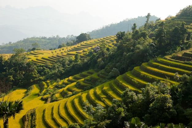 Campos de arroz en terrazas de khuoi my, provincia de ha giang, vietnam del norte