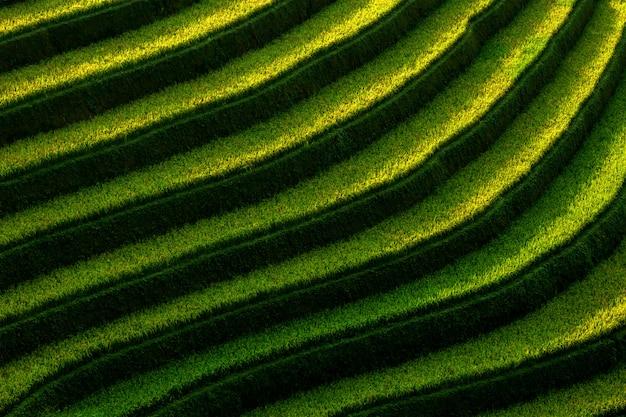 Campos de arroz en terrazas de mu cang chai, yenbai, vietnam. paisajes de vietnam.