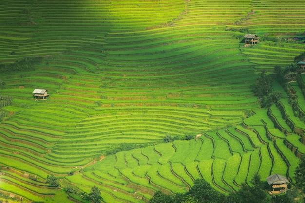 Campos de arroz en terrazas de mu cang chai yenbai vietnam