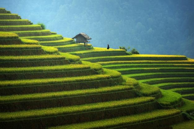 Campos de arroz en terrazas en la temporada de lluvias en mu cang chai, vietnam