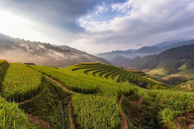 Campos de arroz en terrazas verdes en mu cang chai