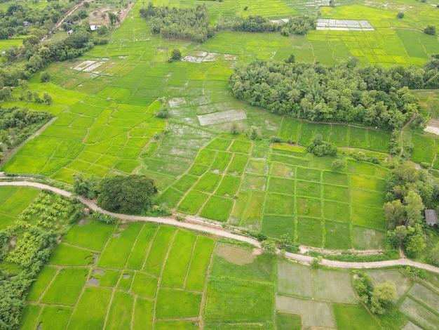 Campos de arroz. tiro de ángulo alto desde drones en tailandia