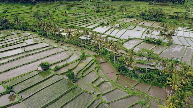Los campos en bali son fotografiados desde un avión no tripulado
