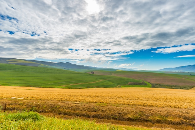 Campos cultivados y granjas con cielo escénico, agricultura de paisaje. sudáfrica tierra adentro, cultivos de cereales.