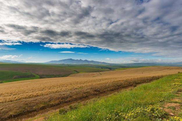 Campos cultivados y granjas con cielo escénico, agricultura paisajística