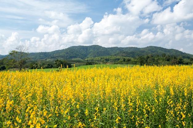 Campos de flores amarillas con fondo de montaña y cielo azul