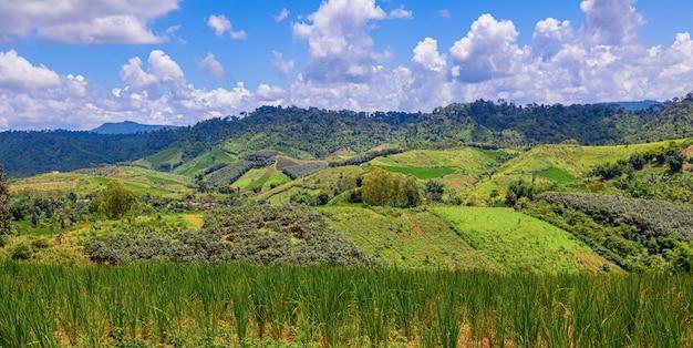 Campos de maíz en las montañas. se ve muy hermosa