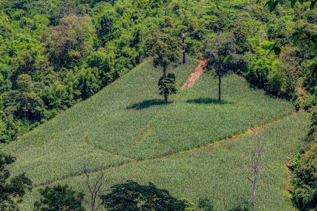 Campos de maíz en las montañas