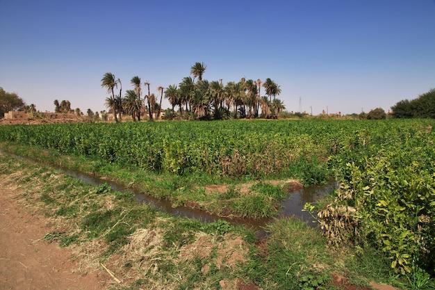 Campos en el pequeño pueblo en el río nilo, sudán