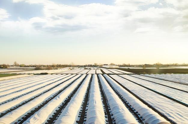 Campos de plantación de agricultores cubiertos con agrofibra hilada. el uso de la tecnología en la agricultura