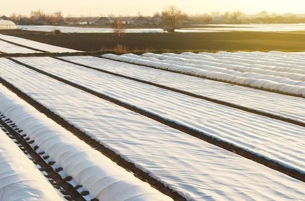 Campos de plantación de agricultores cubiertos con agrofibra hilada