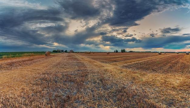 Campos de trigo cosechados