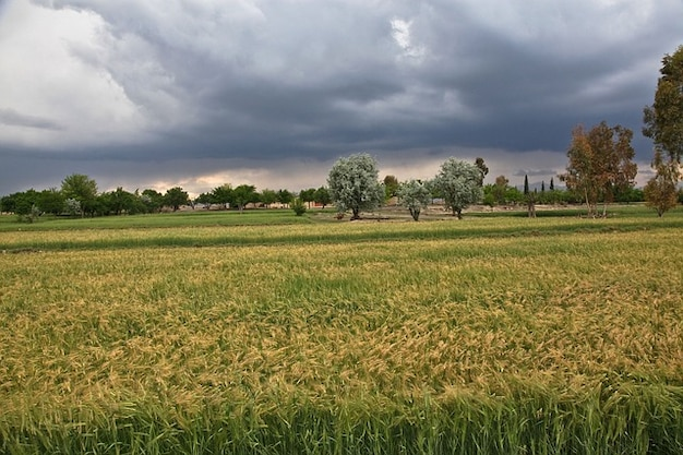 Campos de viento tormenta vendaval naturaleza
