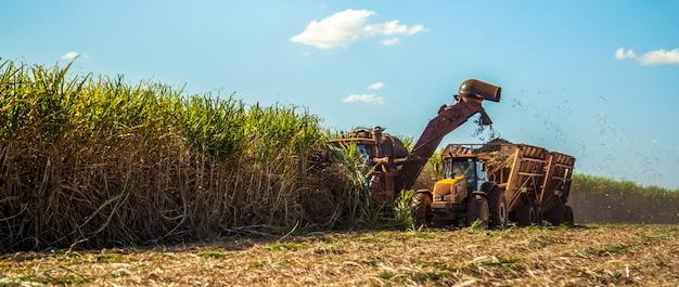 Caña de azúcar hasvest plantación