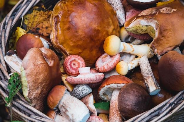 Canasta con varios hongos comestibles de cerca en otoño