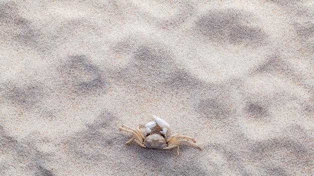 Cangrejo en la arena de la playa para el concepto de verano y playa.