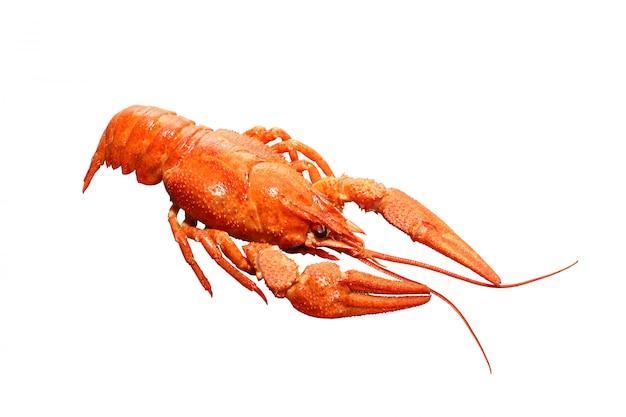 Cangrejo rojo hervido aislado en un fondo blanco con trazado de recorte