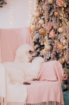 Caniche blanco sentado junto al árbol de navidad