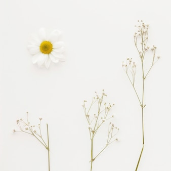 Capullo de margarita cerca de ramitas de planta verde con flores pequeñas