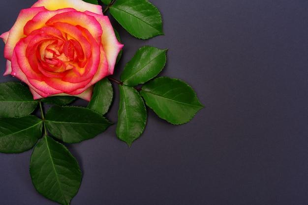 Capullo de rosa amarilla con hojas verdes.