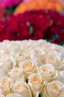 Capullos de hermosas rosas rojas y blancas frescas.