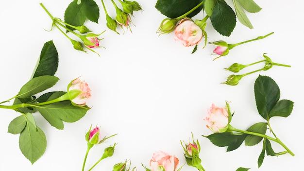 Capullos de rosa dispuestos en marco circular sobre fondo blanco
