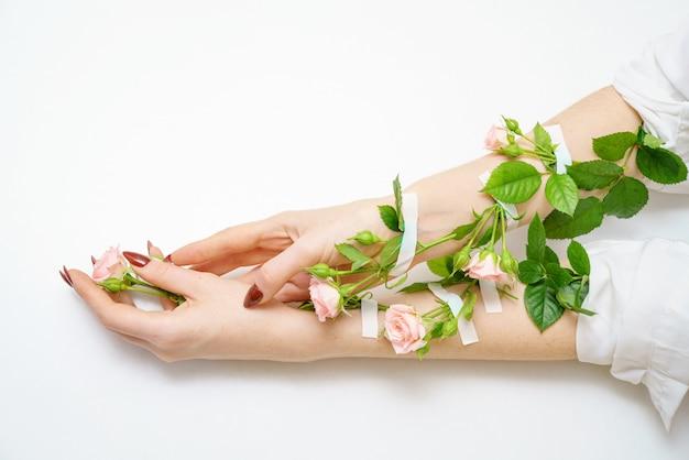 Capullos de rosa rosa en las manos,